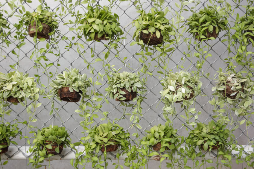 9 Vertical Garden When You Have A Green Thumb, Even A Chain