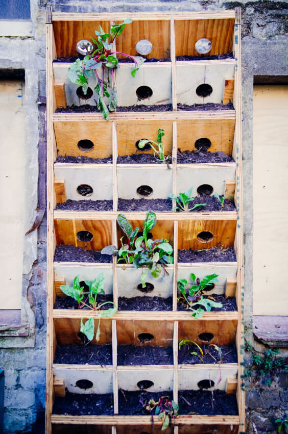 11-vertical-garden Repurposed wooden displays are great for growing one or more types of vegetables. The above sprouting beets turn what could have been a neglected installation into a useful grow spac