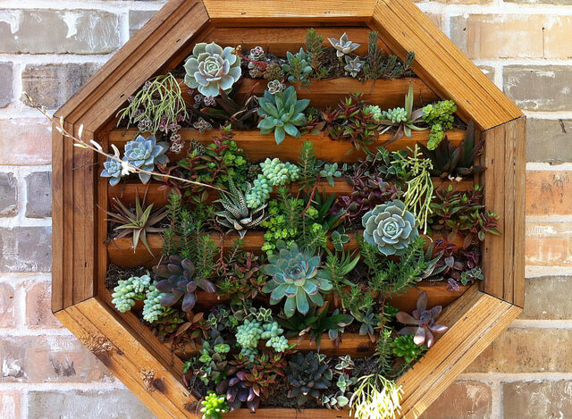6fl-vertical-garden Got a hanging object you would like to spruce up? These succulents intriguingly burst forth from a wooden frame vent that was a thrift store find.