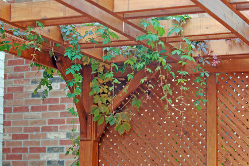 Lovely cedar trellis privacy screen.