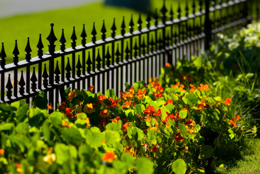 This Short Fence Has Extra Spikes And, In Contrast With The Flowers,  Provides A