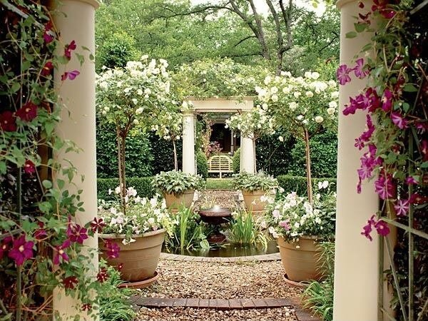 rose trees in portable pots are a great way to add vertical dimension to your garden - Backyard Rose Garden