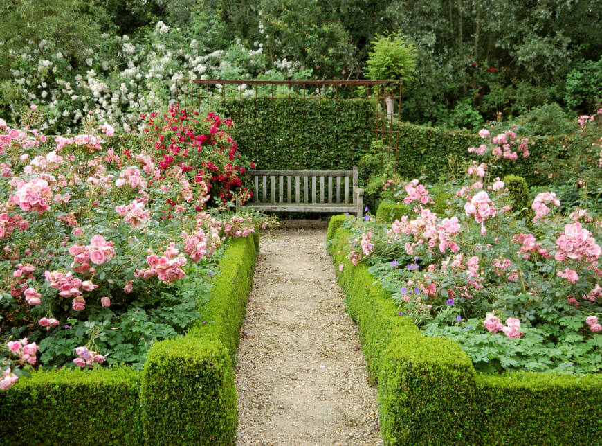 Pink roses fill in the planter beds while red and white climbers cascade over the garden wall in the background. A bench provides a lovely vantage point from which to enjoy the garden.