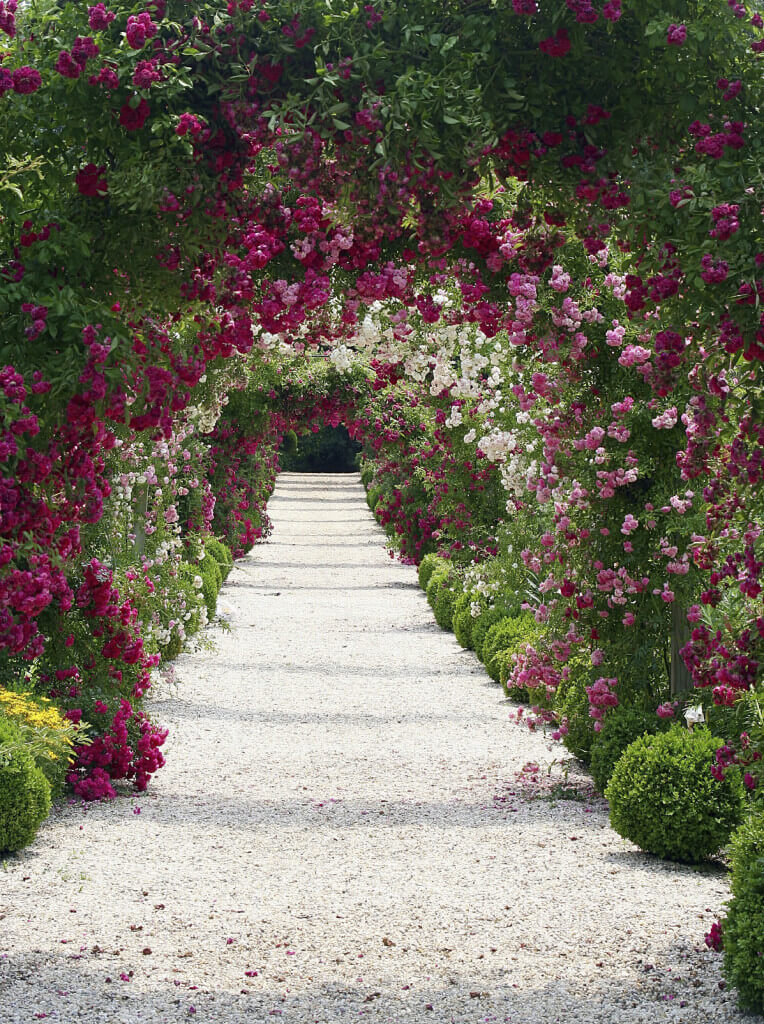 Repeating rows of pale pinks and bright fuchsia climbing roses trained over arches, creates a very romantic cover over crushed rock this pathway.