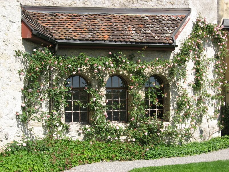 We Love The Contrast Between The Stone Exterior Of This Country Home And  Delicate Pink Climbing