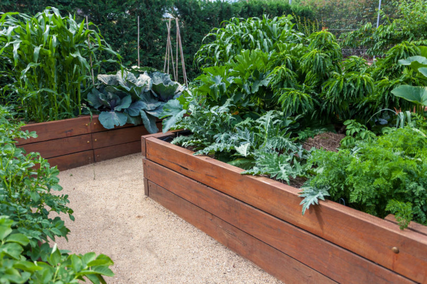 lush raised garden beds in neat wooden boxes - Raised Garden Bed Design Ideas