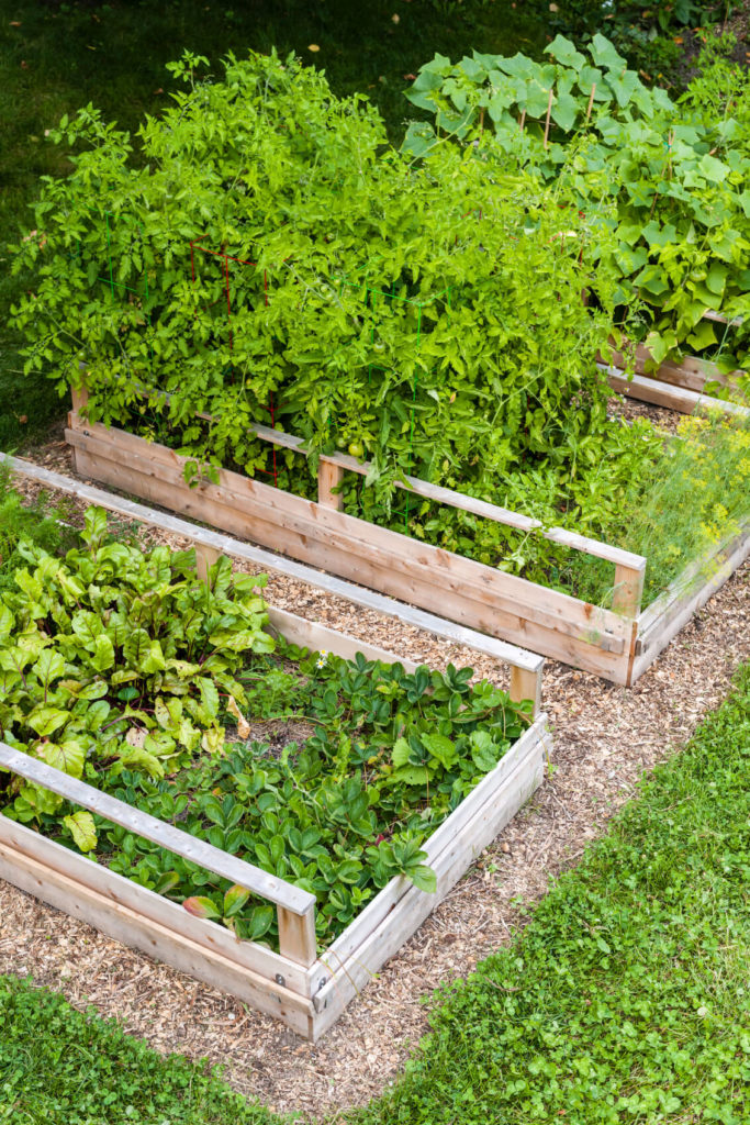 These are short raised garden beds with a natural wood frame. These are great for smaller yards, as they take up much less space than others. The planks are thin so that the perimeter of the bed does not cut too far into rest of the yard.