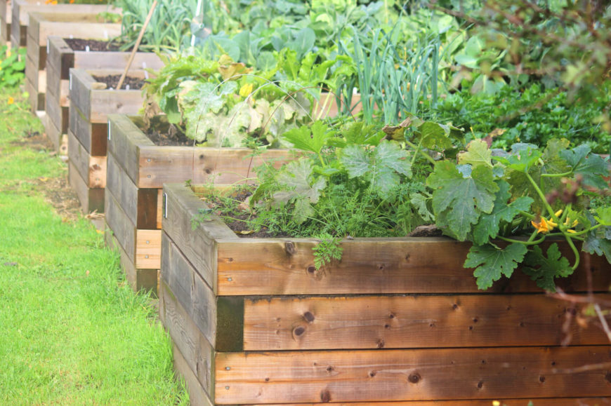 Here are series of short and attractive simple natural wood raised garden beds filled with vegetables.