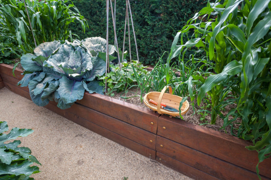 Here is a thin and well finished raised garden bed. This wooden bed is very visually appealing.
