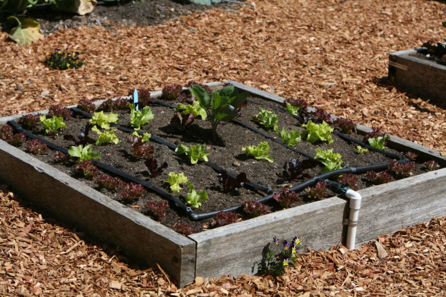 How To Add Manure To Raised Beds