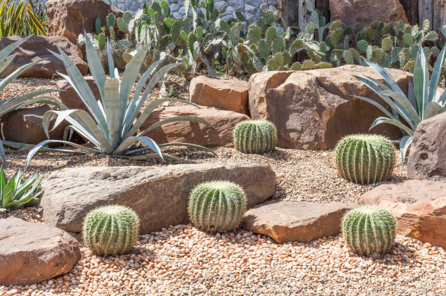 Top 25 best Spanish Cactus Rock Gardens Design Desert