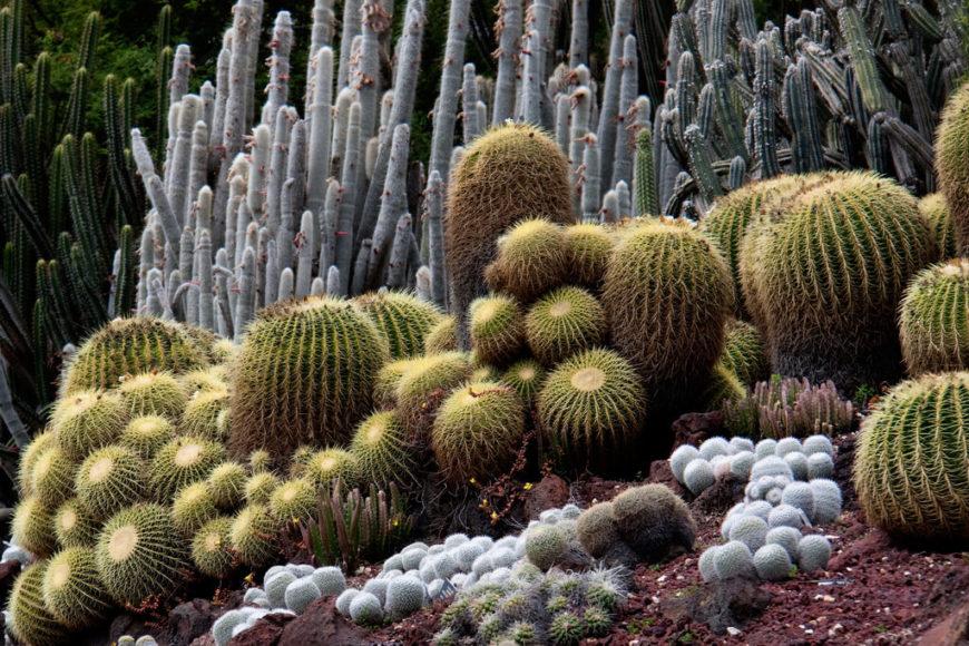 34 Sharp Cactus Garden Ideas