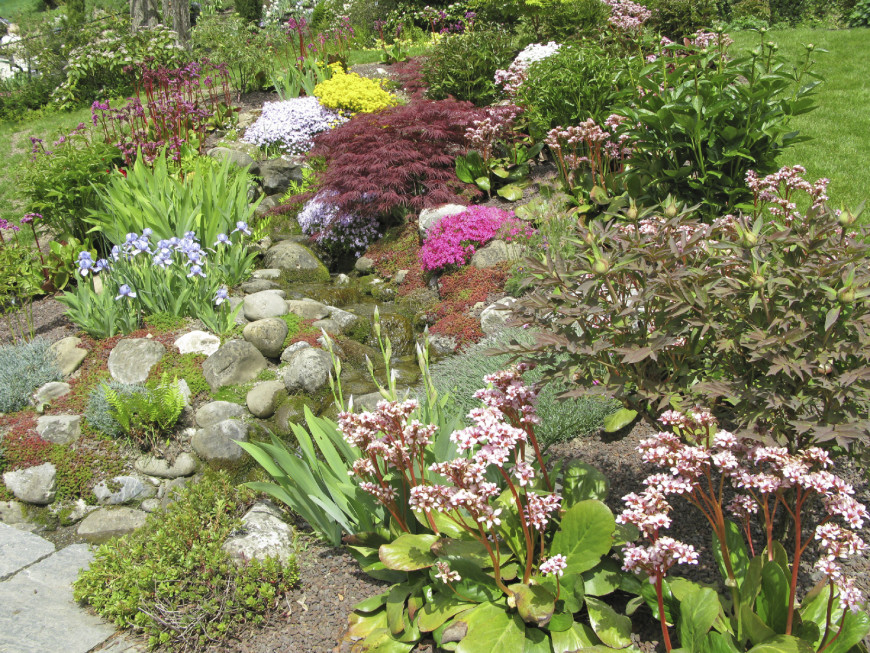 A Few Well Placed Small Shrubs Can Accentuate Rock Features