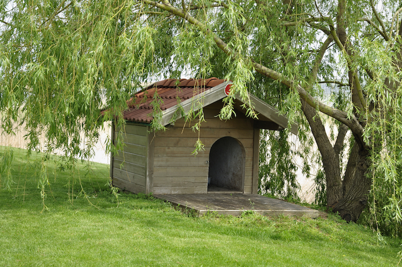 Simple dog house with red shingles underneath a willow tree.