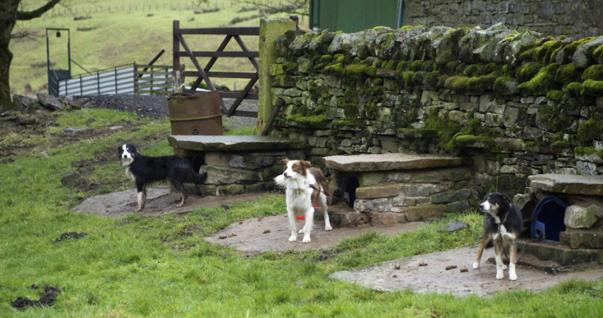 If rocks are abundant, these stone cairn-like doghouses might be a good option for working dogs like these shepherd breeds.
