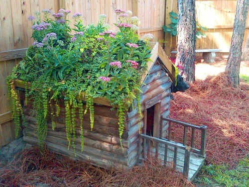 For a more quaint look, distressed paint and roof planters are a great way to make your dog house look more idyllic. It also helps keep the inside of the dog house cooler during the daytime.
