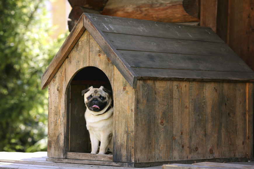 A simple wooden dog house is well-suited for on a covered front porch. Without shingles, it wouldn't fare well during a rainstorm.
