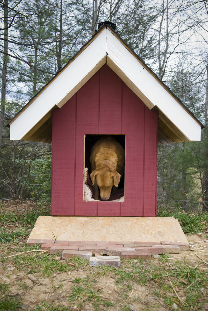 A narrow dog house with a ramp and a wide roof to make sure that the rain just rolls right off.