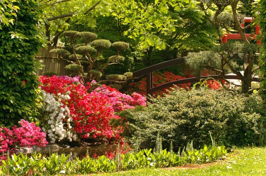 If you have a water feature, an arched bridge is the perfect element to put over it. These bridges are emblematic of Japanese gardens. The arched bridge introduces some man made elements but keeps the lines smooth and organic.