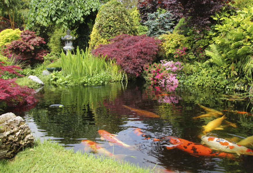 Koi are a staple of Japanese ponds. These fish can be quite colorful and bring an abundance of life to your space. A koi pond has its own little ecosystem, which increases the organic feel of your space.