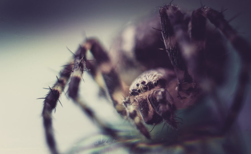 Natural Ways To Get Rid Of Spiders Indoors