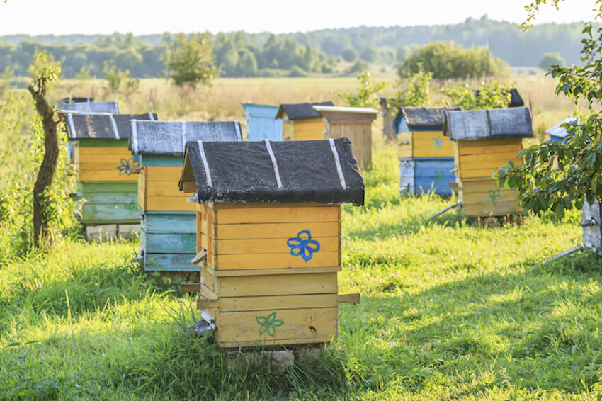 31 Beautiful Backyard Bee Hives