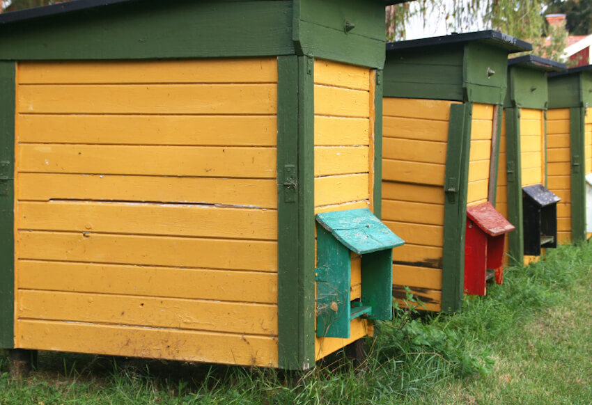 If you've got a large yard and plenty of open space, you might want to consider houses like this for your beekeeping duties. The bright colors and uniform designs make them perfect for large colonies, and convenient to access.