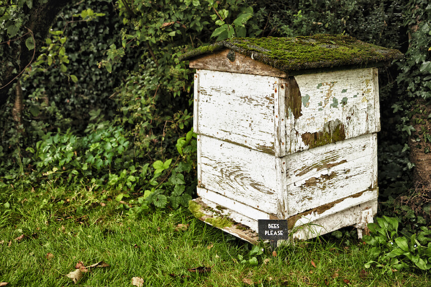 This box exudes rustic charm, with a moss covered roof and old tarnished wood paneling. We're not sure if it's a great spot to harvest honey, but it could be the ideal casual bee home in your backyard.