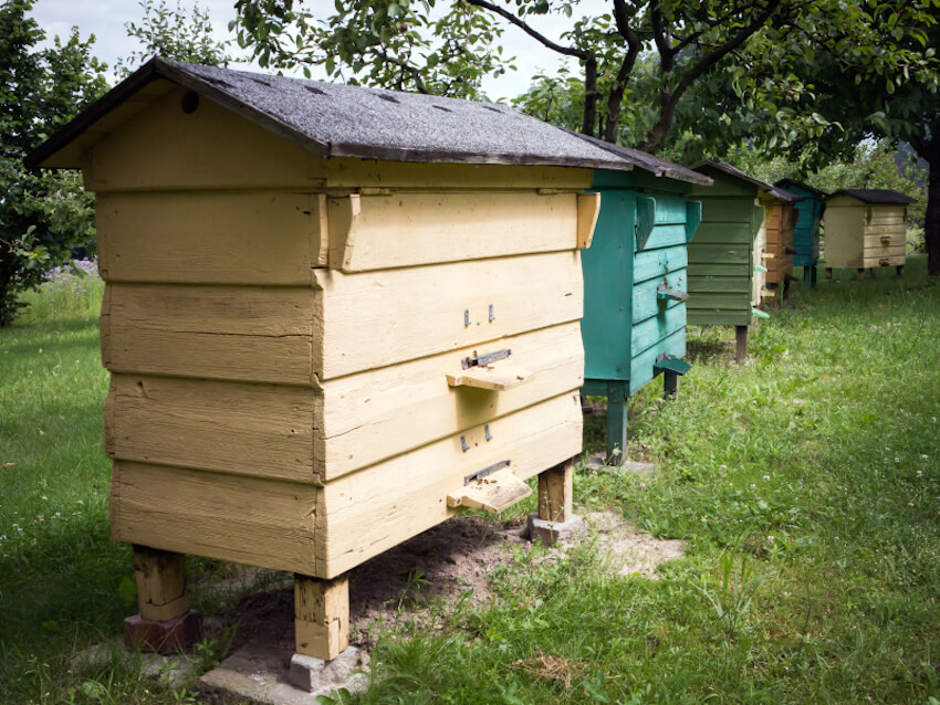 Similar to the project above, this set of multicolored apiaries could be the optimal solution for your backyard if you've got plenty of room. With full roofs and easy access, they're as convenient as they are handsome.
