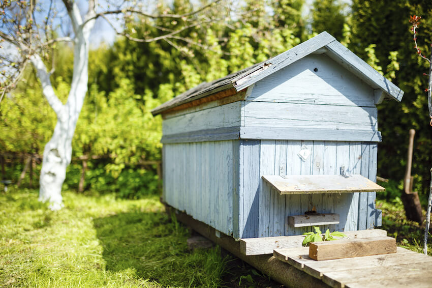This lengthy, low-set box is perfect for convenience and style, with a light blue paint that would stand out well in any yard and an ease of access for observation and honey collection.