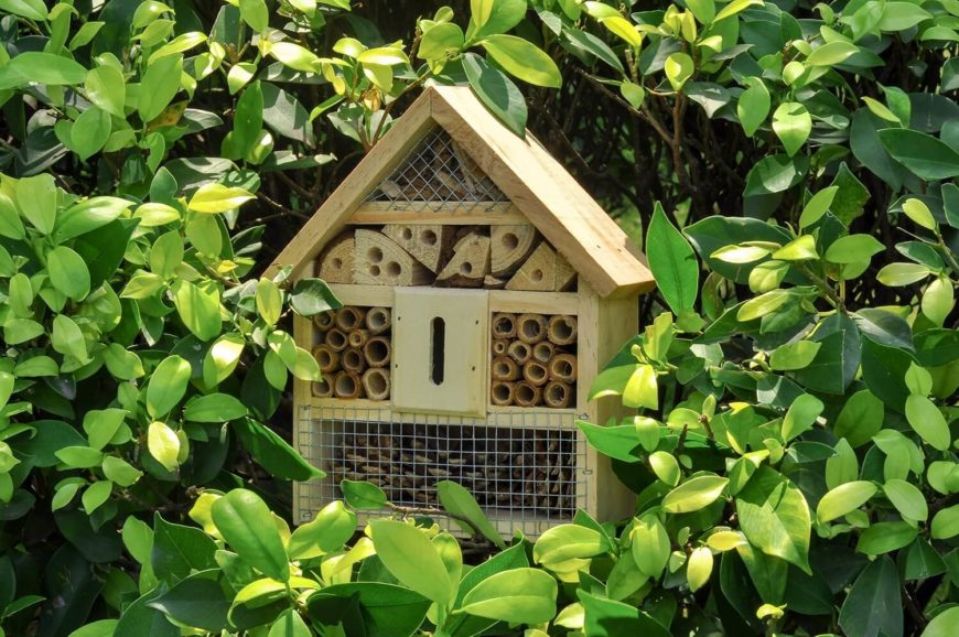 Merveilleux 27 Backyard Bee Hive Ideas   Amazon