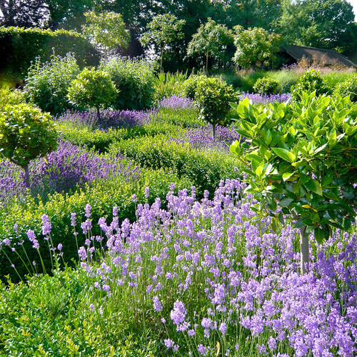 There are some great plants that can create different looks for your large garden. This garden has a meadow look that feels wide open and lush at the same time.