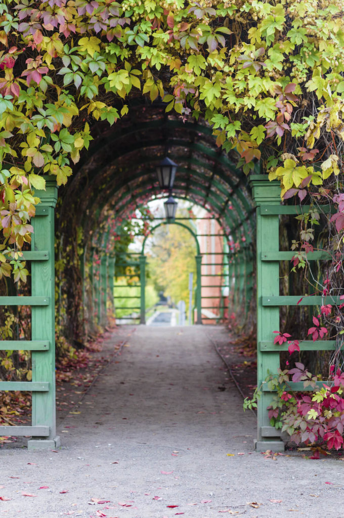 This outdoor arch is covered in lovely red and green vines. By utilizing wooden arch structures and vines you can create tunnels and covered pathways with beautiful plants. This adds significant character and interest to these tunnels.