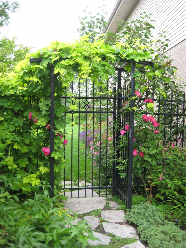This iron gate and fence is adorned with a lovely array of flowers and vines. Of all the manmade structures that pair well with vine overgrowth, iron bars have a special appeal.
