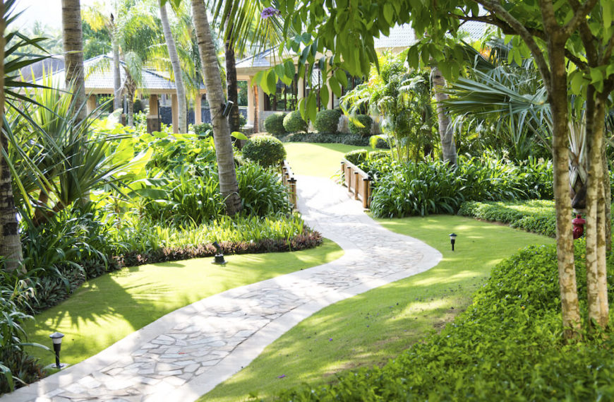 palm trees provide good shade without taking up a great deal of ground space the - Garden Design Trees