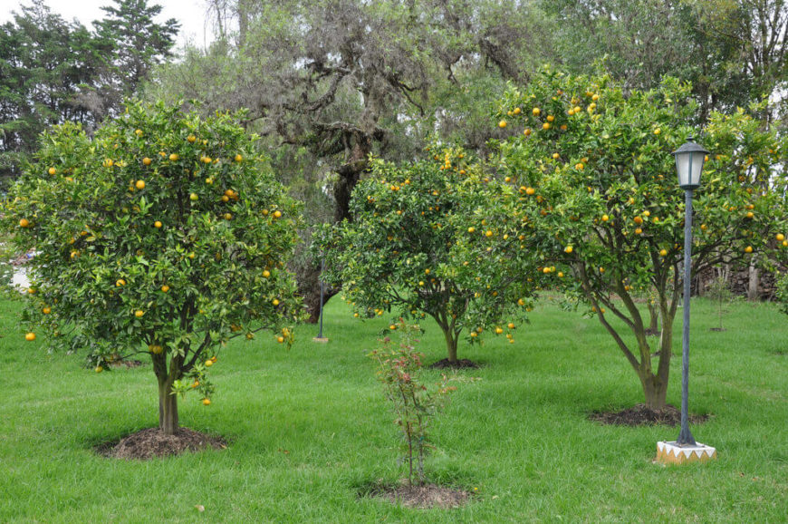 Even on their own merit fruit trees look great. This yard is dotted with a few fruit trees. These trees bloom with dots of color that can then be picked, eaten, and enjoyed. Fruit trees are not only beautiful but functional.